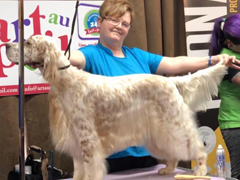 Smiths Falls Pet Grooming